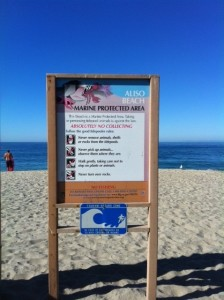 Tide Pool Rules For Aliso Beach